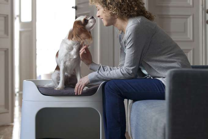 Which breed of dog to choose for an indoor life?