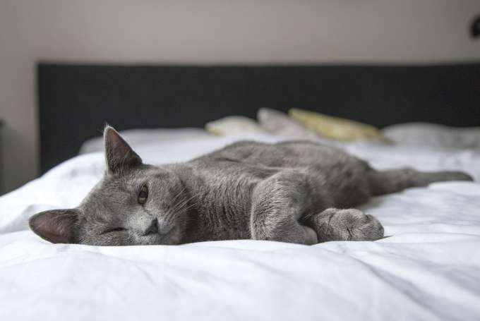 Is sleeping with your pet a good idea?